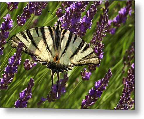 France Metal Print featuring the photograph In The Lavender by Joe Bonita