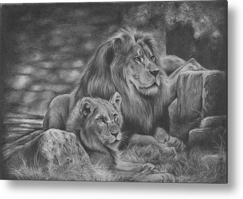 Graphite Drawing Metal Print featuring the drawing Lion Family by JAndy