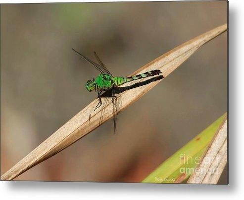 Dragonfly Metal Print featuring the photograph Little Green Friend by Deborah Benoit