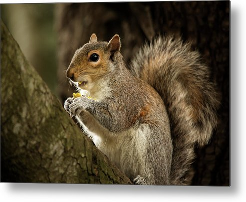 Animal Metal Print featuring the photograph Lunch by Bob Cournoyer