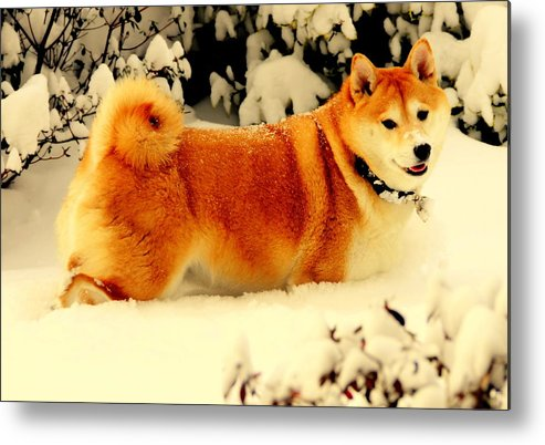 Akeview Metal Print featuring the digital art Margo Likes The Snow by Aron Chervin