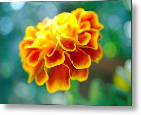 Flowers Metal Print featuring the photograph Marigold by Heather S Huston