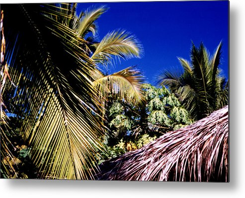 Palms Metal Print featuring the photograph Palms All Around 2 by Lyle Crump