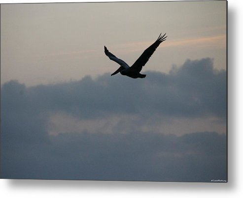 Pelican Metal Print featuring the photograph Pelican At Dusk by Laura Martin