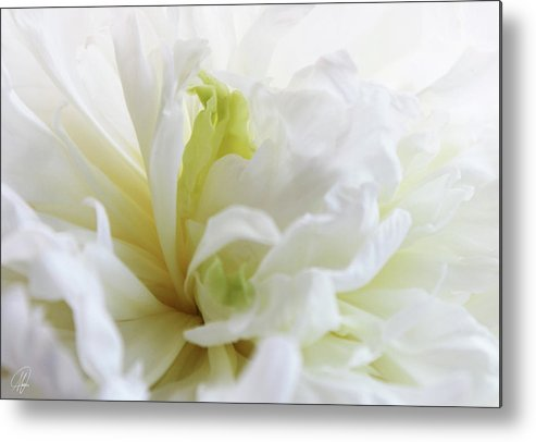 Cream Metal Print featuring the photograph Peony by Margaret Hormann Bfa