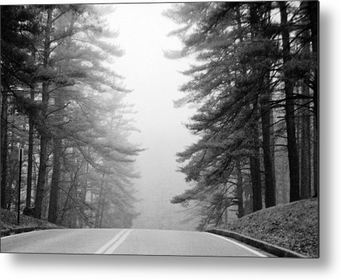 Pines Metal Print featuring the photograph Pine Mist by Paul Trunk
