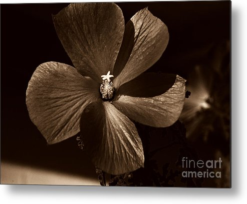 Clay Metal Print featuring the photograph Pinwheel by Clayton Bruster
