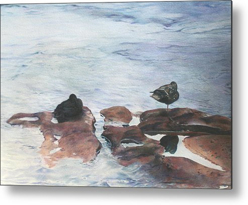 Ducks Metal Print featuring the painting Riffles by Catherine Henry
