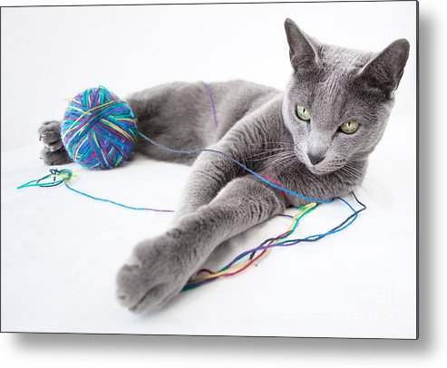 Russian Metal Print featuring the photograph Russian Blue by Nailia Schwarz