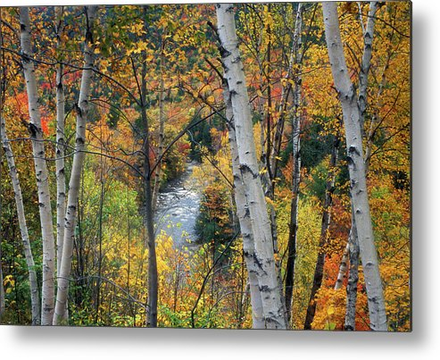 New Hampshire Metal Print featuring the photograph Saco River And Birches by John Burk