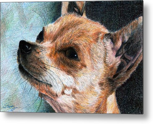 Chihuahua Metal Print featuring the drawing Sandy by Tina Storey