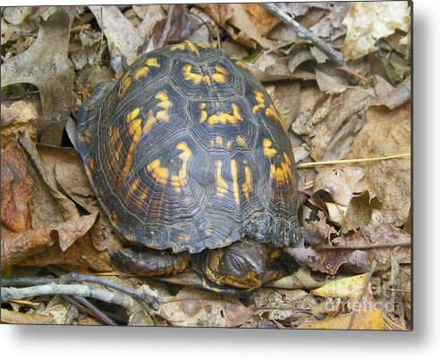 Wildlife Metal Print featuring the photograph Sleeping Turtle by Gary Morgan