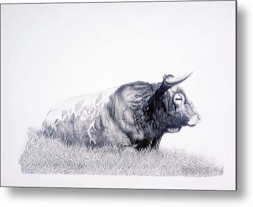 Longhorn Metal Print featuring the drawing The Herdmaster by Howard Dubois