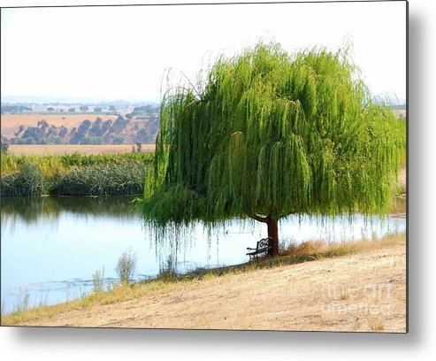 Tree Metal Print featuring the photograph The Tree That Wept by Lori Leigh