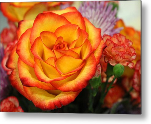 Rose Metal Print featuring the photograph Warmth On A Winter's Day by Living Color Photography Lorraine Lynch