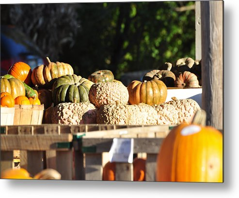 Still Life Metal Print featuring the photograph Wart Pumpkins by Jan Amiss Photography