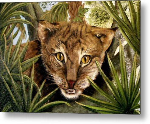 Bobcat Metal Print featuring the painting Watching Floridabobcat by Darlene Green