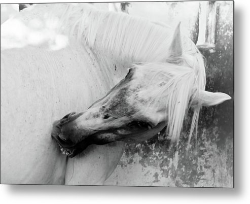 Photo Metal Print featuring the photograph White Horse by Den Lity