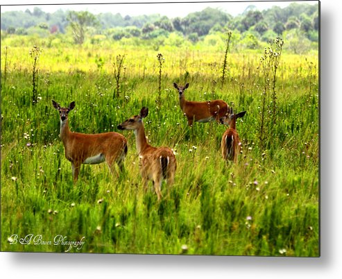 Whitetail Deer Metal Print featuring the photograph Whitetail Deer Family by Barbara Bowen