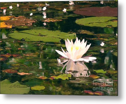 Water Lilly Metal Print featuring the photograph Wild Water Lilly by Patricia L Davidson