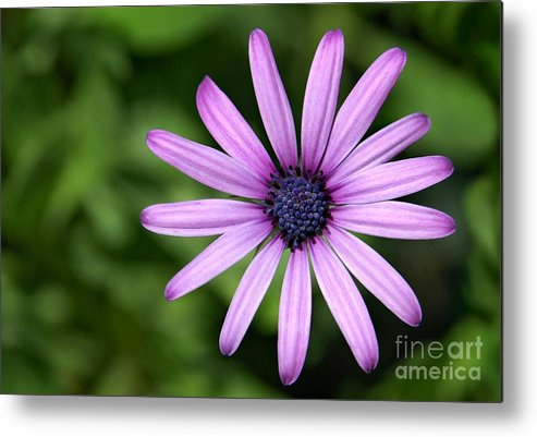 Flower Metal Print featuring the photograph In The Garden by Dan Holm