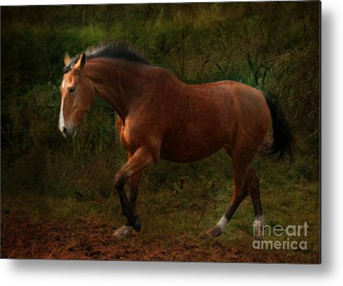 Horse Metal Print featuring the photograph The Bay Horse by Angel Ciesniarska