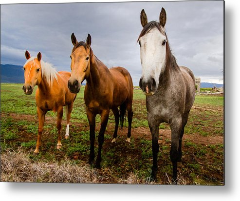 Mammal Metal Print featuring the photograph 3 Horses by Jean Noren