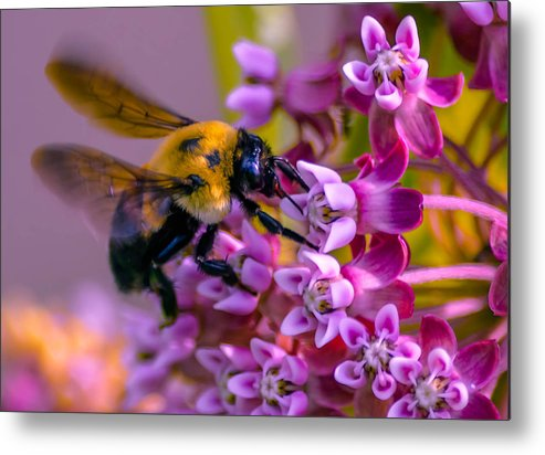 Allergy Metal Print featuring the photograph Busy Bee by Brian Stevens