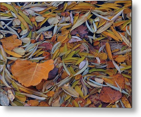 Autumn Metal Print featuring the photograph Autumn Palette by Steven Milner