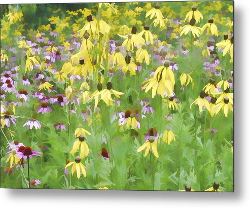 Purple And Grat Coneflowers Flowers Metal Print featuring the photograph Purple And Grat Coneflowers by Barry Schroeder