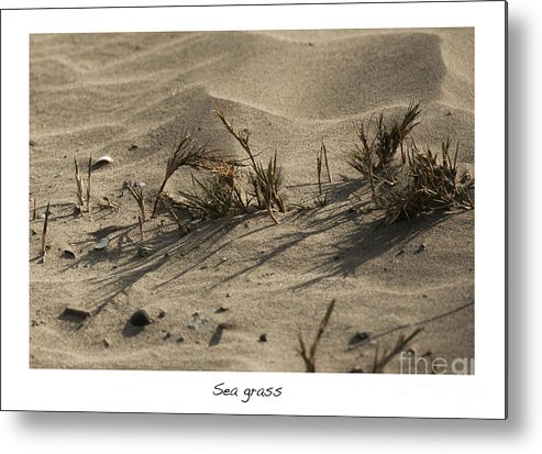 Sea Grass In The Sand Metal Print featuring the photograph Sea Grass by Artist and Photographer Laura Wrede