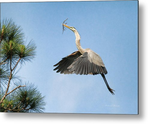 Blue Heron Metal Print featuring the photograph Up To The Nest by Deborah Benoit