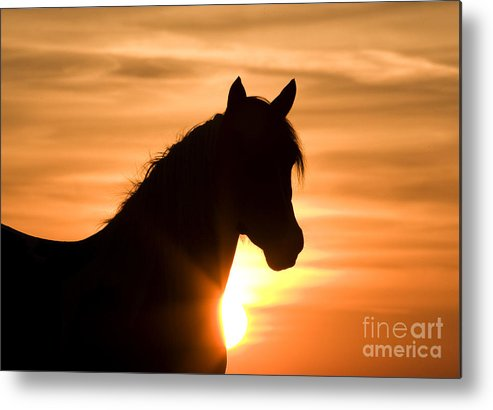 Horse Metal Print featuring the photograph Wild Stallion At Sunrise by Carol Walker