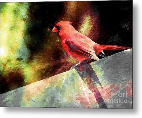 Bird Metal Print featuring the photograph Cardinal by Elaine Manley