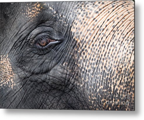 African Metal Print featuring the photograph Elephant Close-up Portrait by Johan Larson