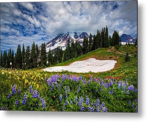 Horizontal Metal Print featuring the photograph Wildflowers On Mazama Ridge by Photo by David R irons Jr