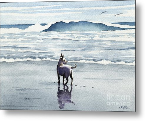 Chihuahua Metal Print featuring the painting Chihuahua At The Beach by David Rogers