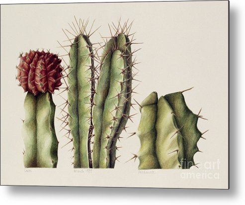 Botanical Metal Print featuring the painting Cacti by Annabel Barrett