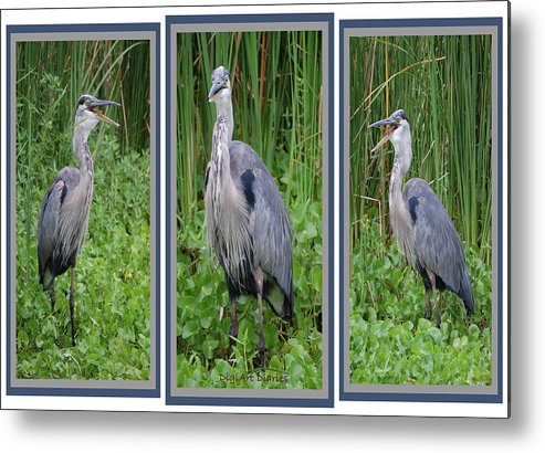 Bird Metal Print featuring the digital art Great Blue Heron Collage by DigiArt Diaries by Vicky B Fuller