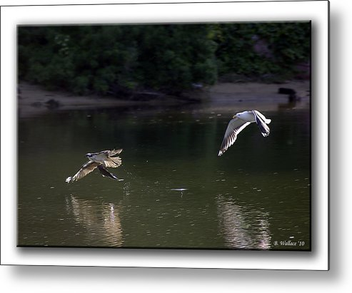 2d Metal Print featuring the photograph Hot Pursuit by Brian Wallace