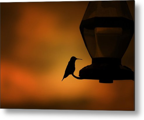 Hummingbird Metal Print featuring the photograph Hummingbird After The Storm by Al Mueller