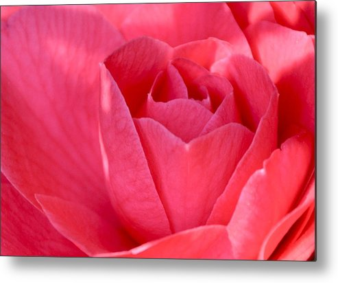 Pink Metal Print featuring the photograph Rose Camellia by Lori Kesten