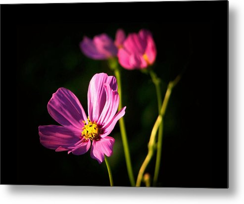 Flowers Metal Print featuring the photograph Three Flowers by Karen Scovill