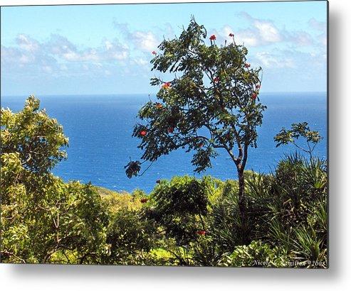 Landscape Metal Print featuring the photograph Island Breeze by Nicole I Hamilton