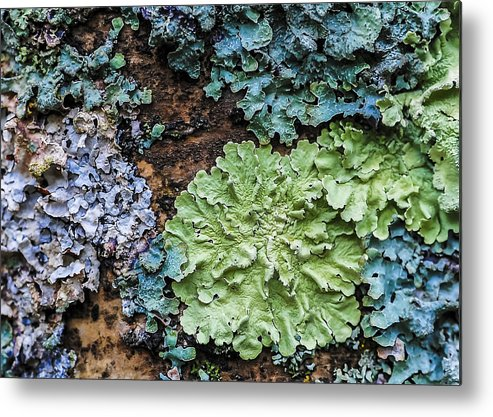 Lichens Metal Print featuring the photograph Bark Art by Christopher Burnett