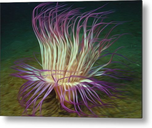 Starfish Metal Print featuring the painting Beautiful Sea Anemone 1 by Lanjee Chee