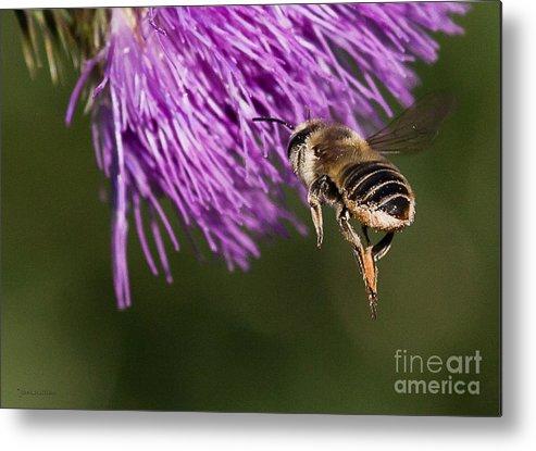 Honey Bee Metal Print featuring the photograph Bee Butt by Jan Killian