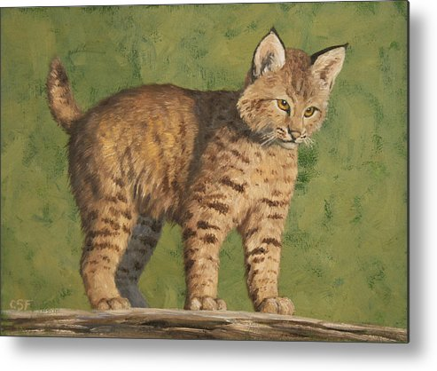 Cat Metal Print featuring the painting Bobcat Kitten by Crista Forest