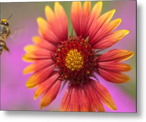 Metal Print featuring the photograph Bulls Eye by Ricky Cerda