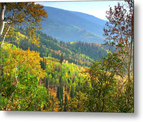 Colorful Colorado Turning Aspens Mountain Landscape Scene Metal Print featuring the photograph Colorful Colorado by Brian Harig